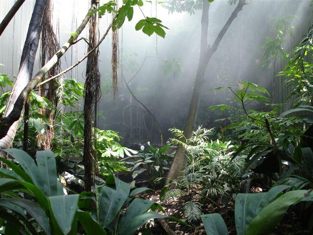 rainforest-climate-change.jpg
