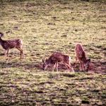 Baby_Deer-150x150.png