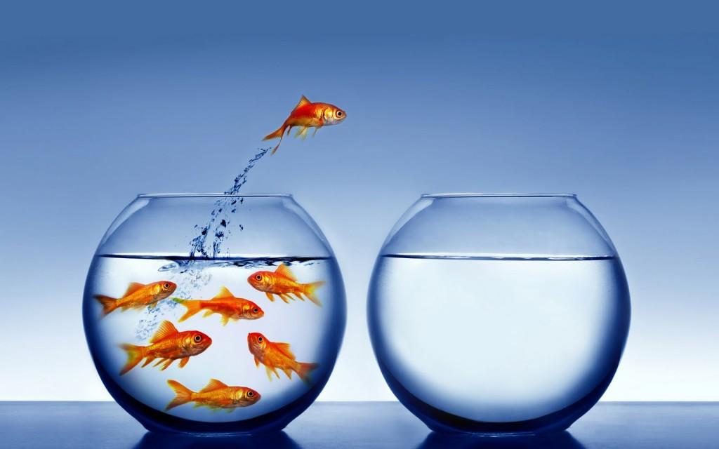 fishintroverts-1024x640.jpg