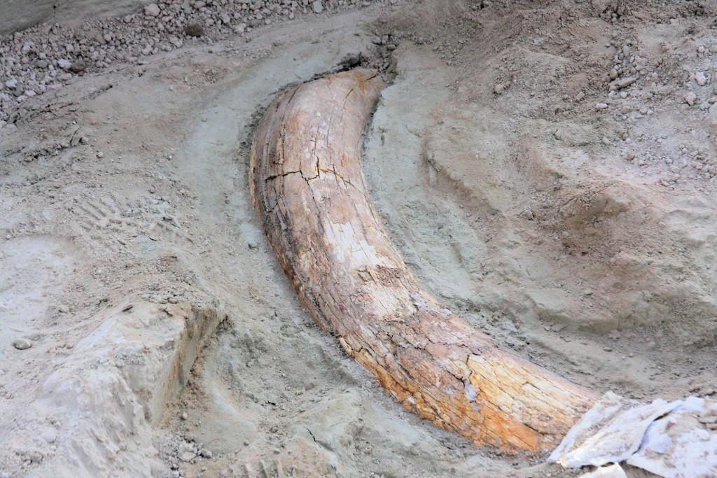 Tule_Springs_fossils-1024x683.jpg