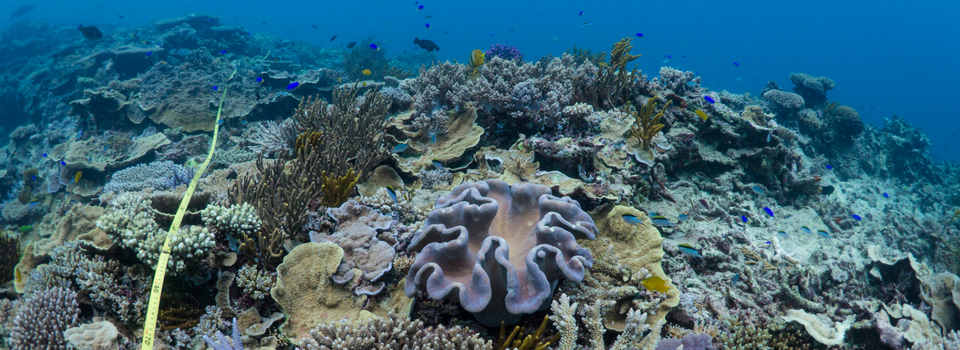 Reef Science|Robust citizen science data to help reefs