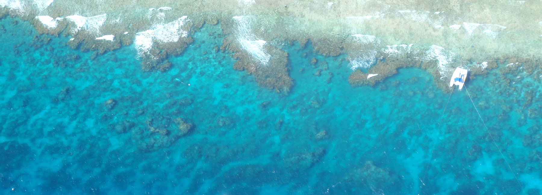 Great Barrier Reef|Reef Check on the GBR