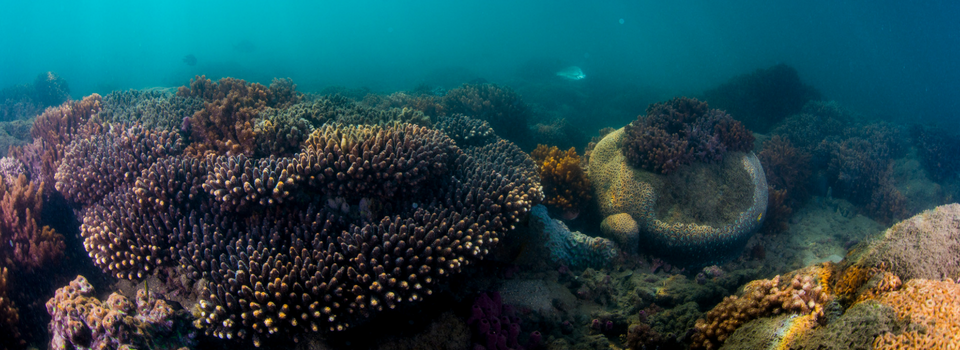 South East Queensland| Looking after lesser known subtropical reefs