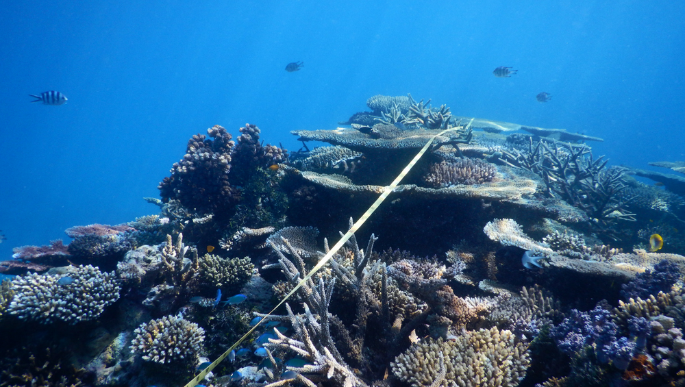 In science we trust. We support and promote environmental initiatives with proven benefits for reef health, but we are not a political or advocacy group.