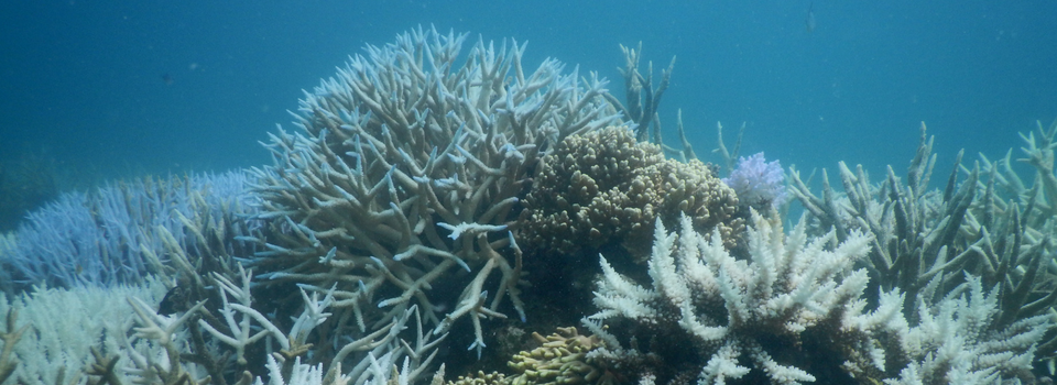 Threats to the Reef | Understanding the problem