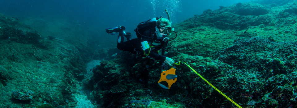 Reef Check Methods | Our citizen science approach
