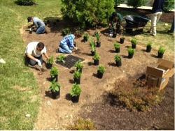 Restoring the environment and developing youth: crew installing a rain garden