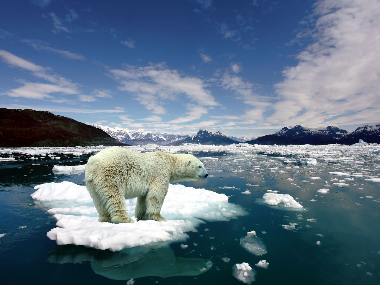 Earth-Climate-Change-will-Cost-us-Dearly-2.jpg