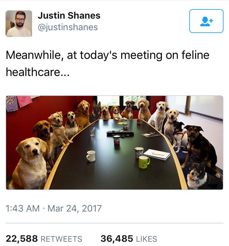 feline_health_care.jpg