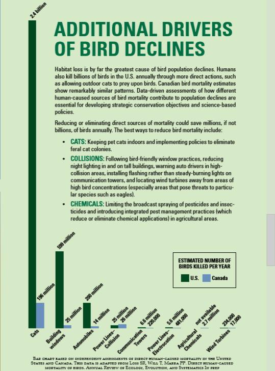 bird_declines.PNG