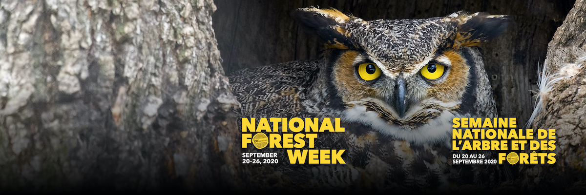 20200219-CIF-National-Forest-Week-Campaign-Twitter-Banner.jpg