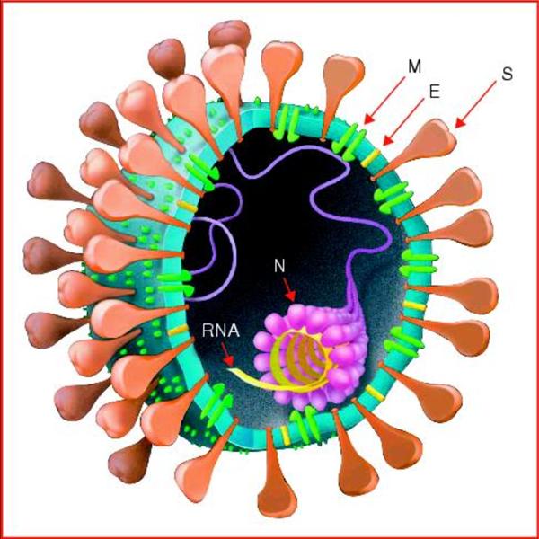 Corona Virus Cartoon