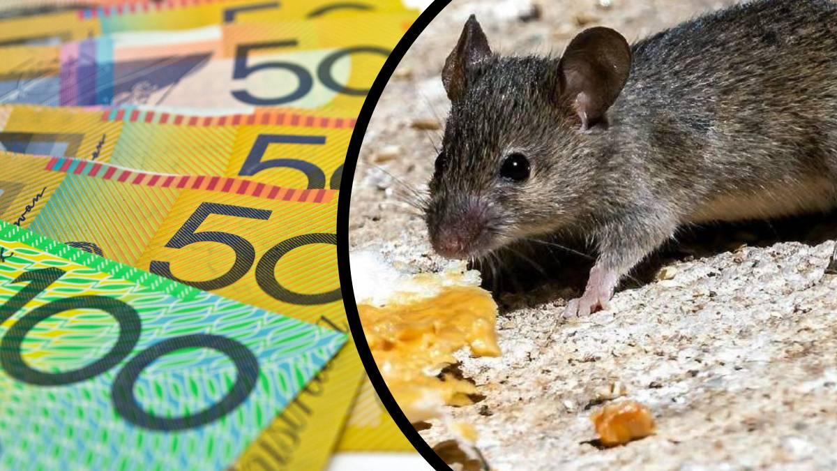 Mice plague rebate falls short of community expectations Image
