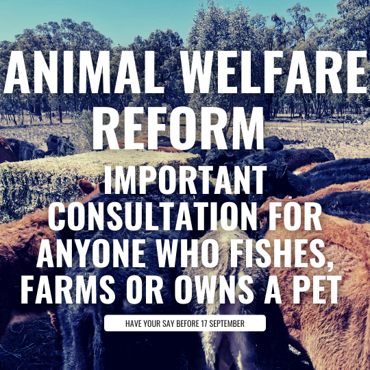 Animal Welfare Reform - Important consultation if you own animals Image
