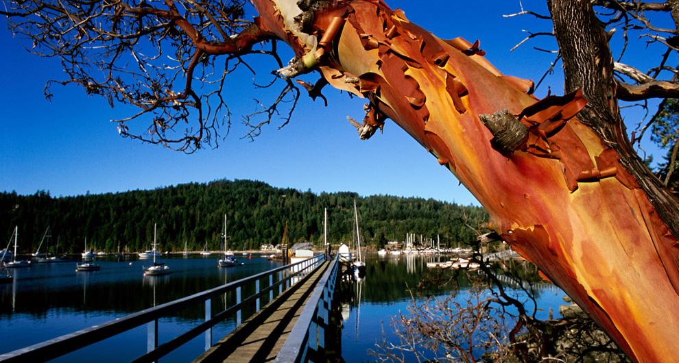 1-2354-pender-island-browning-harbour.jpg