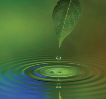 water-drip-from-leaf-to-pond.jpg
