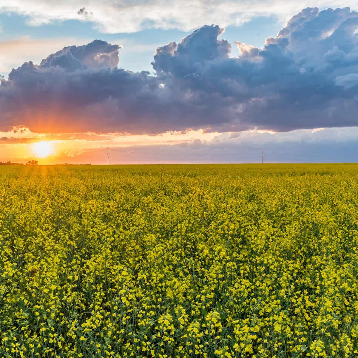 Growing Saskatchewan