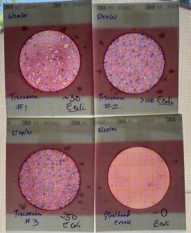 e-coli-tiscornia-5-29-21-cropped.jpg