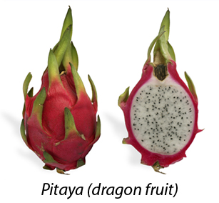 1024px-Pitaya_cross_section_ed2.jpg