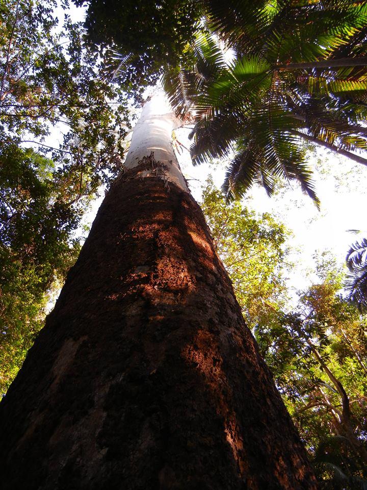 Save_Steve_Irwin_Way_Forest_image.jpg