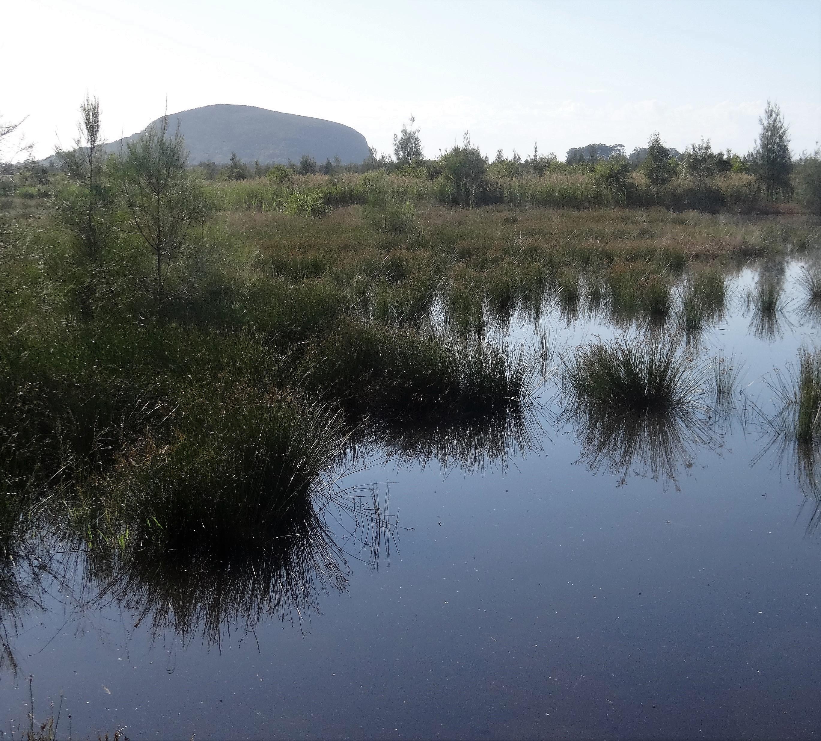 Mt Coolum-Yandina Ck Wetlands Greg Roberts