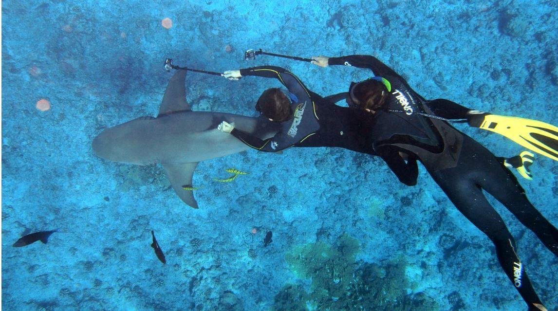 Humane Society International decries politicking over sharks - Sunshine Coast Environment Council