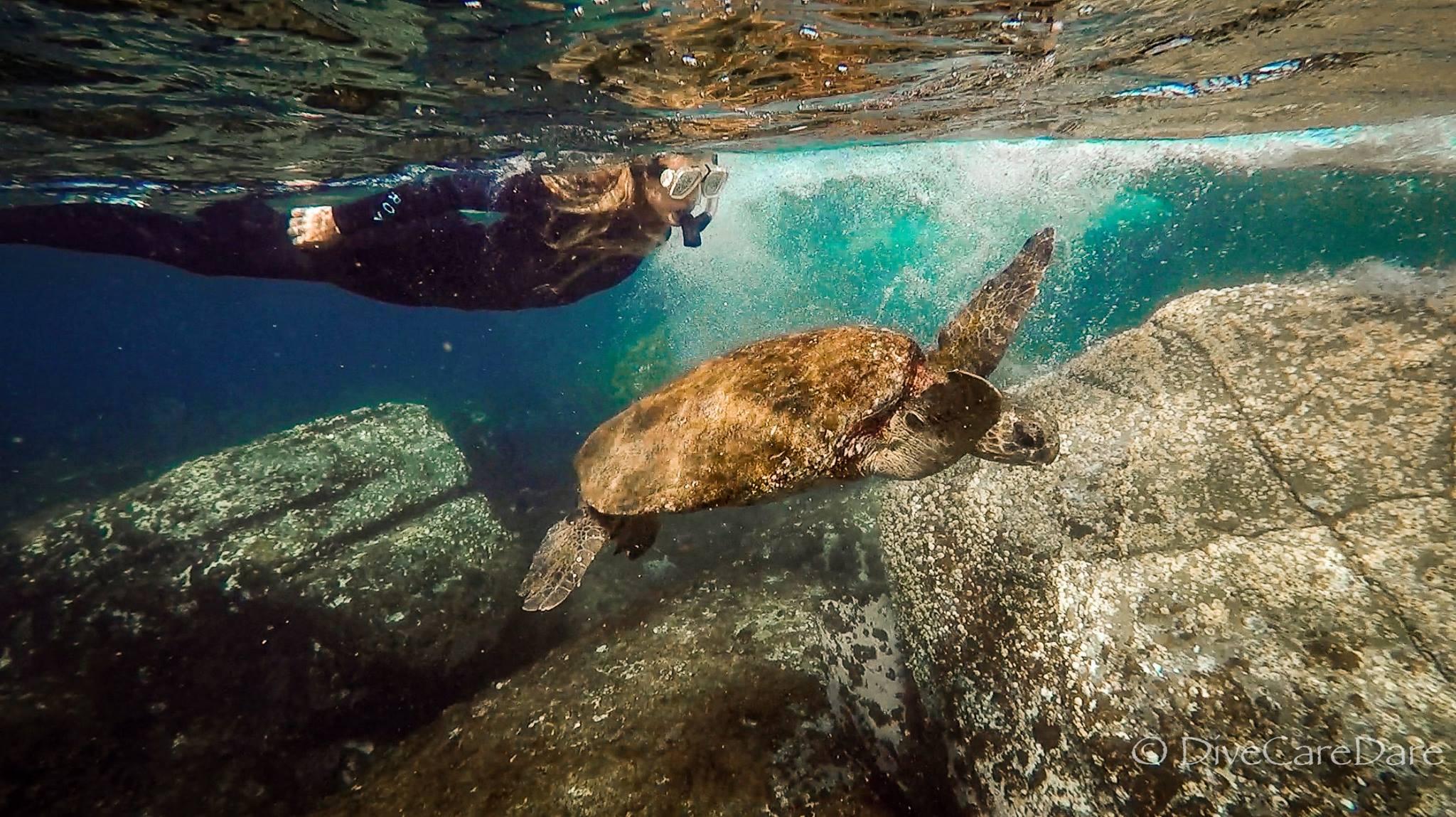 Mudjimba Island Snorkelling