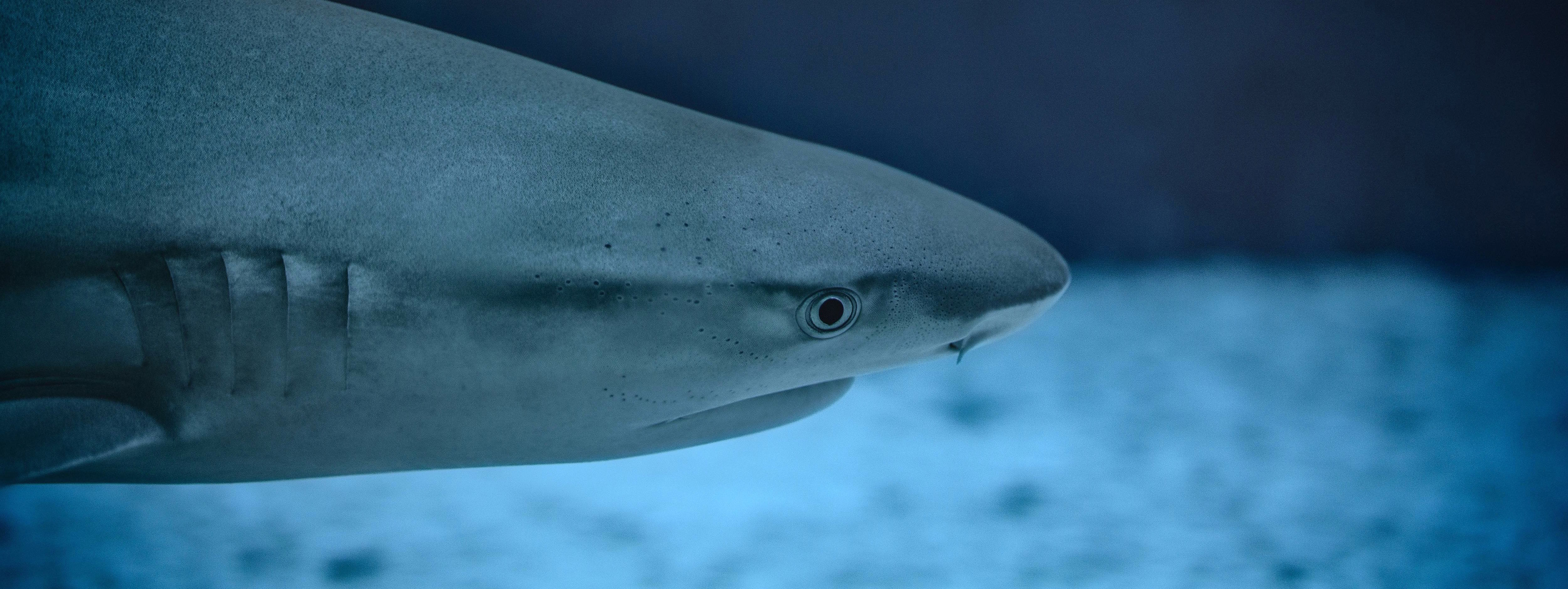 Take action on lethal shark control