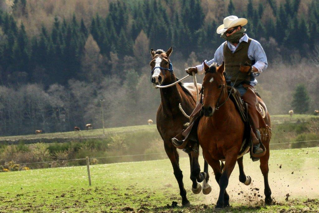 Jock and horses