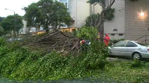 fallen-tree-3.jpg