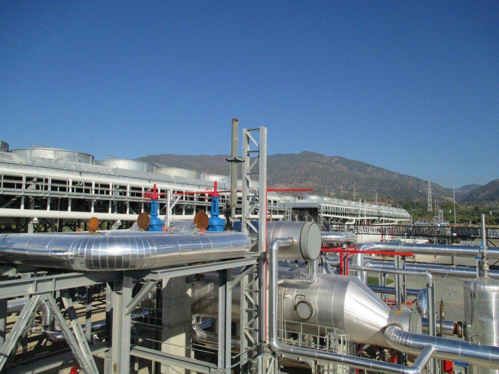 Pamukoren_plant_Turkey-1024x768-1-1024x768.jpg