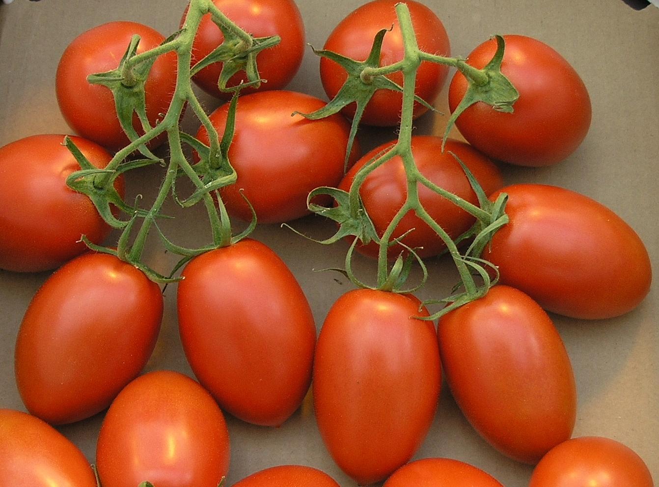 TomateTrossRomanaTyp.jpg