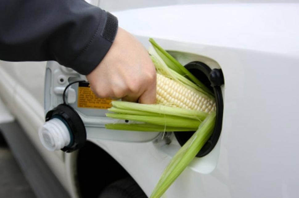 maiz-combustible.jpg
