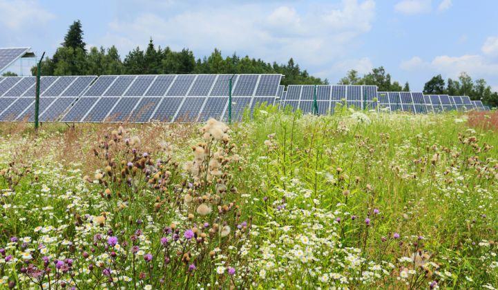 community_solar_garden.jpg