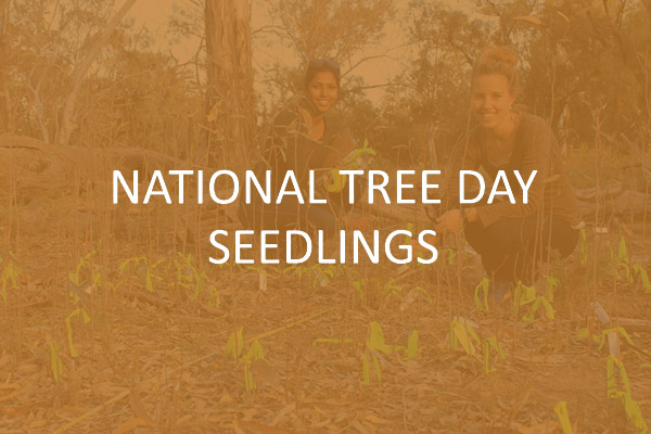 National Tree Day Seedlings