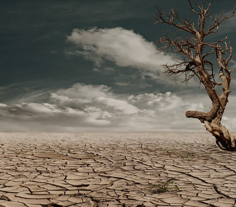 Tree in middle of deserted land