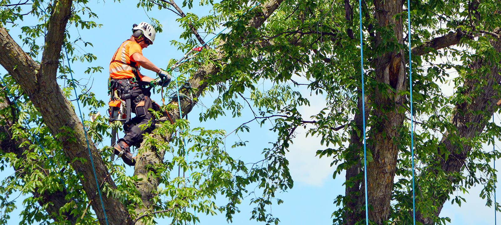 ArboristMainEdited.jpg
