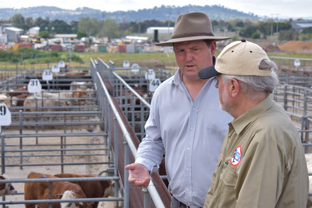 Robert Borsak at Cowra saleyards
