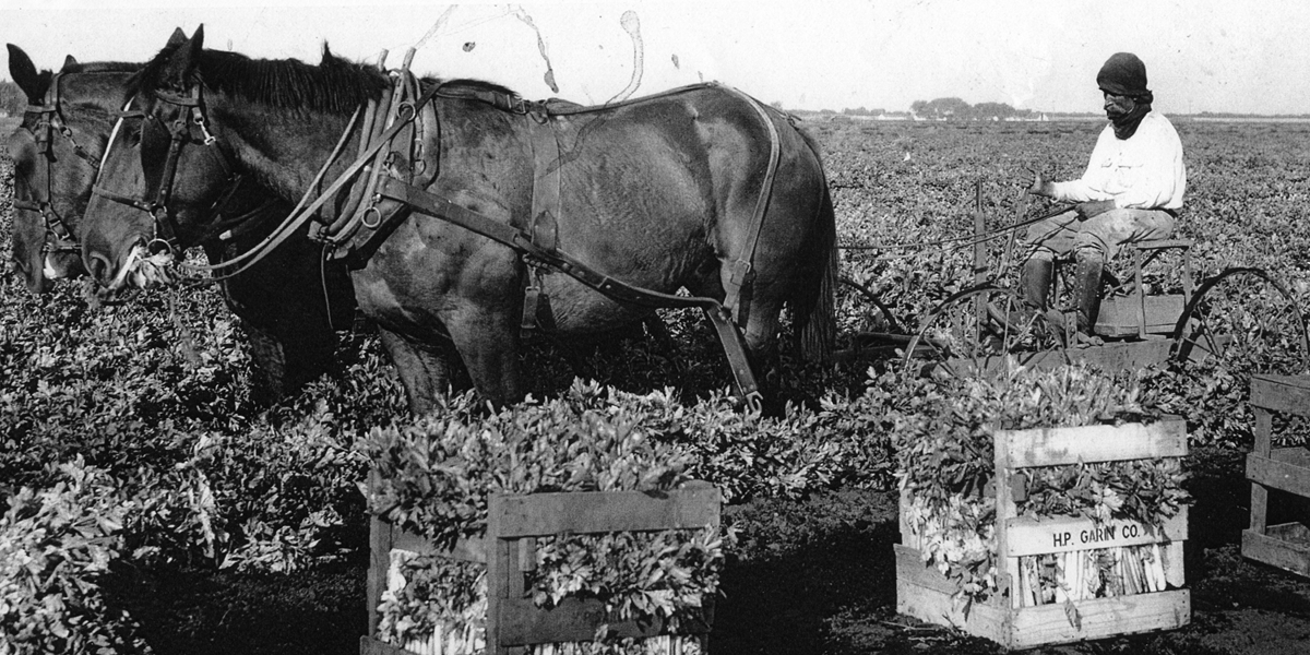 horse  and farmers sowing seeds