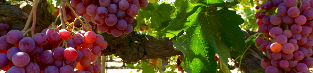 1060_x_250_Grapevines_2.png
