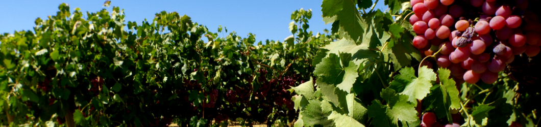 1060_x_250_Grapevines_4.png