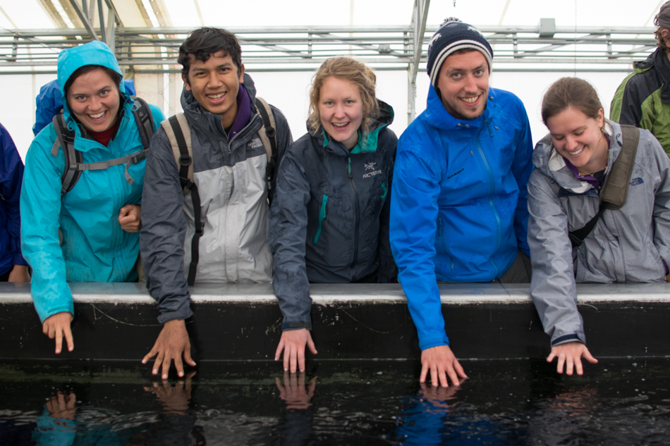 Sitka Conservation Society employees feel the baby salmon nipping at their fingers inside the Medvejie hatchery.