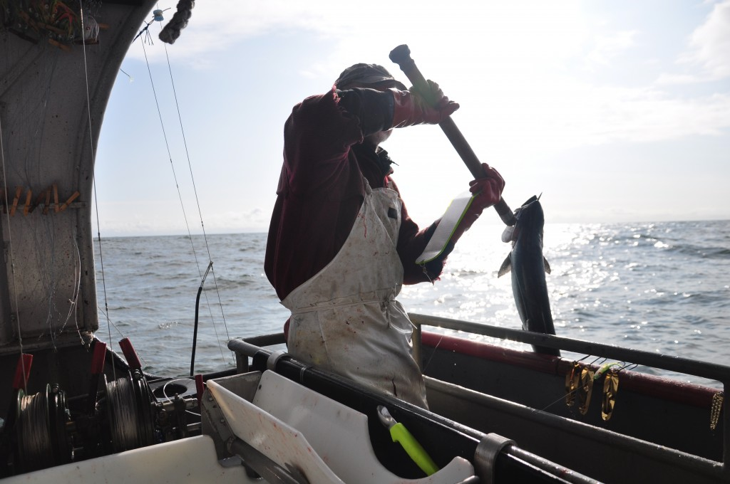 Hauling a salmon aboard. Photo by Berett Wilber