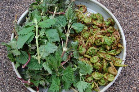 nettles and fiddleheads