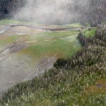 Tongass Forest and Estuary