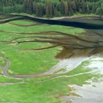 The branching patterns of streams in the estuaries are pathways for salmon