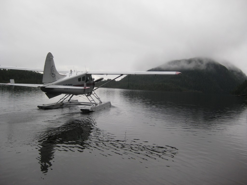 Beaver on Lake Suloia
