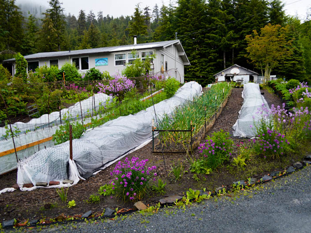 Sitka Conservation Audio Still: Building a local food movement from the front yard