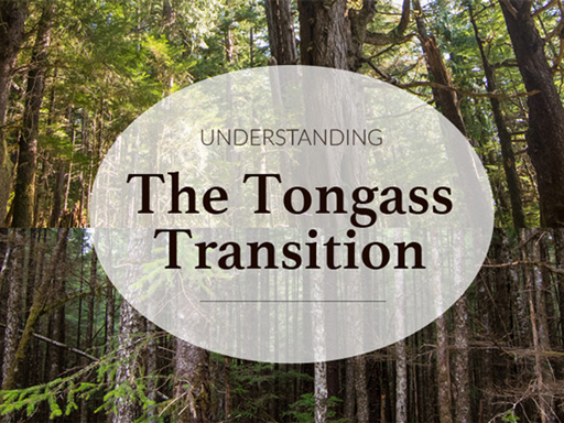 Photo for Understanding the Tongass Transition