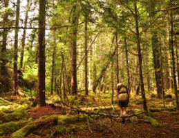 Photo for Voices of the Tongass - The Contingencies of Chance